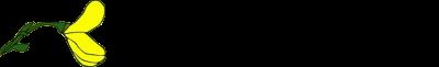 Flor de Giesta